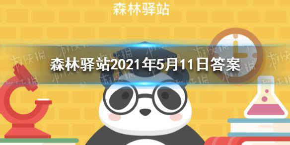 2019年是大熊猫科学发现多少周年 森林驿站2021年5月11日答案